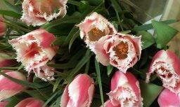 Lielisks variants uzņēmumiem un steidzīgajiem: ziedu piegāde ar pasūtīšanu internetā