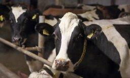 Latvijas eksperti iepazīstina ukraiņu kolēģus ar ES standartu ieviešanu un kooperācijas pieredzi piensaimniecībā