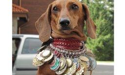 Latvijas suņi piedalās starptautiskā izstādē