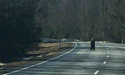 ВИДЕО: Любопытный медведь встал на задние лапы и рассматривал проезжающих