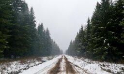 Meža nozarei nākamgad būs pieejams 237 927 eiro valsts atbalsts
