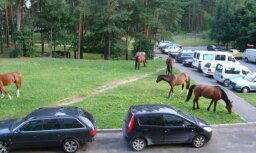 Daudzstāvu māju pagalmā ganās zirgi