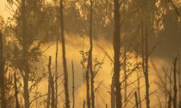 На четвертый день пожар на Адажском полигоне удалось ликвидировать