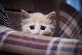 Vai kaķiem mēdz būt depresija