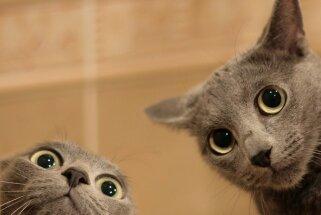 Ja nezini, ko darīt, pēti kaķus! Amizanti fakti par peļu junkuriņiem