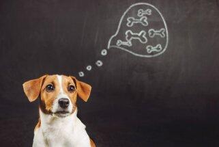 Rejošais gudrinieks: mūžīgi aktuālie jautājumi par suņa spēju domāt