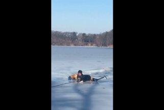 Video: Ļaudis ASV izglābj ledū ielūzušu sunīti