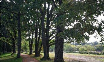 Fanātiska dārznieka sapņa piepildījums – Lēdurgas dendroparkam 45