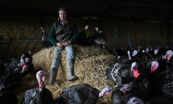 Lai glābtu Ziemassvētku maltīti, briti atvieglo ieceļošanas noteikumus fermu strādniekiem