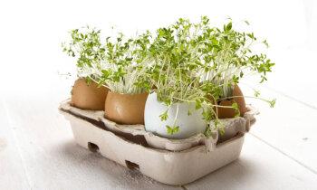 Dīgstu audzēšana mājas apstākļos, speciālistu padomi