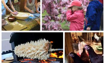 Atvērtās dienas laukos – idejas, kur ģimeniski nosvinēt valsts svētkus un iepazīt uzņēmīgus saimniekus