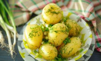 Идеальная картошка: существует ли она в природе? Гид по главному продукту латвийской кухни