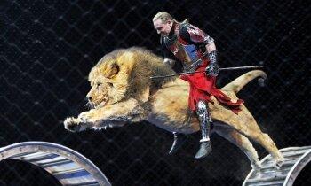Могу выпустить тигров в естественную среду — рядом с пикетом. Аскольд Запашный против рижских защитников животных