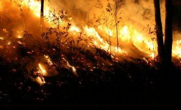 Pieaug ugunsbīstamība mežos; cerības uz lietu no 11. maija
