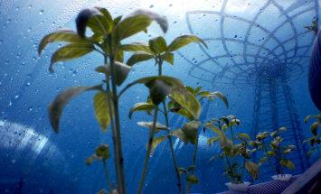 Antarktīdā, dziļi pazemē, kosmosā un zem ūdens: īpatnējākie dārzi pasaulē