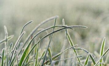 Šonedēļ būs auksts un vējains laiks, dažbrīd gaidāmi nokrišņi