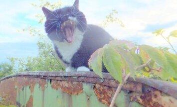 Putnu vērotājs, akrobāti un Hugo - amizantāko kaķu konkursa uzvarētāji
