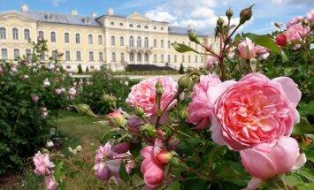 Foto: Rundāles pils rožu dārzs pilnziedā