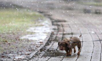 Svētdien Latvijā gaidāmi nokrišņi – slapjš sniegs un lietus