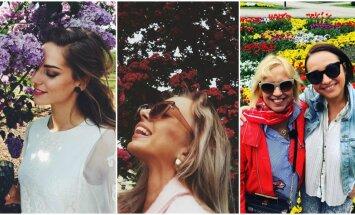 Koši foto: Pašmāju sabiedrības zieds pozē lakstos