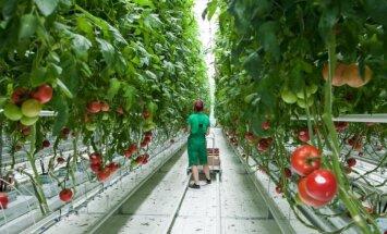'Getliņi Eko' apgrozījums pērn - 13,08 miljoni eiro