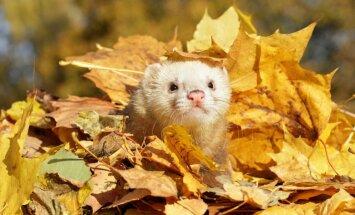 Начало ноября в Латвии будет солнечным и теплым