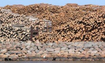 Biedrība: Latvijas kokrūpniekiem pietiek resursu par spīti Baltkrievijas lēmumam neeksportēt zāģbaļķus