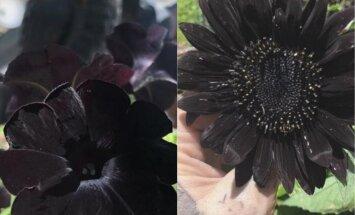 Tetovētāja no ASV iekopj dārzu gotu stilā – ziedi un augi tikai melnā krāsā