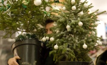 Tirgotāji: Ziemassvētku eglītes izdevīgāk importēt no Vācijas