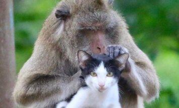 Makaks Taizemē sadraudzējies ar kaķīti