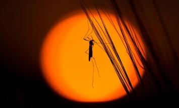 Aicina iepazīt nakts kukaiņu pasauli dabas parkā 'Numernes valnis'