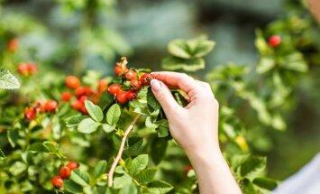 Kādi dārza darbi darāmi no 25. sepembra līdz 2. oktobrim?