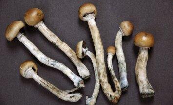 Retro narkotikas: Kā cilvēki apreibinājās tālā senatnē