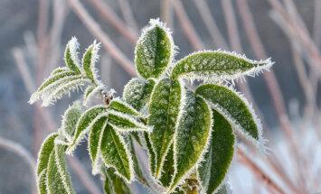 Утром в понедельник подморозило до –6 градусов, днем будет — до +6 градусов