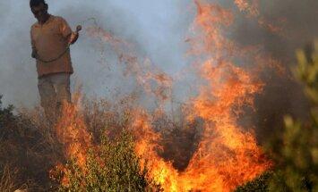 ООН: Лесные пожары в Северном полушарии ускорят глобальное потепление