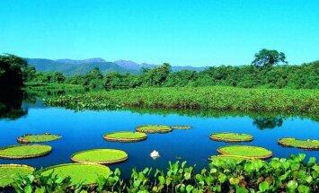 Video: Iepazīsti Brazīliju. Pantanāla – pasaules biosfēras rezervāts un cilvēces mantojums