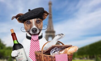 Pieci vienkārši ieteikumi iesācējiem, kā pareizi izgaršot vīnu