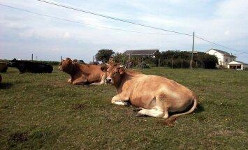 Zemo iepirkumu dēļ pat līdz 40% samazinājušies saimniecību ienākumi, atzīst piensaimnieki