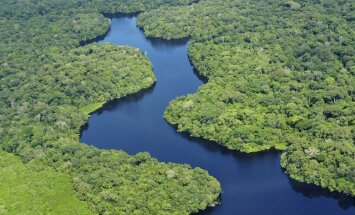 Top 7 lielākie pasaules meži. Vai zini, kas tie ir?