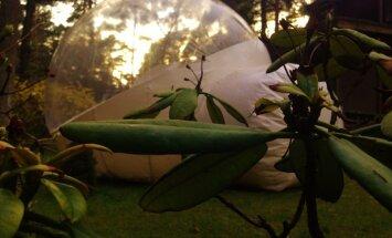 Iespējams, neparastākā tūristu naktsmītne Latvijā – burbuļtelts Bulduros