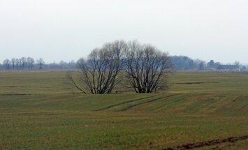 Nedaudz samazina šīs sezonas ražas prognozi; kavējas ziemāju sēja