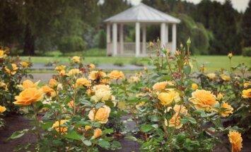 16. jūlijā Salaspils botāniskajā dārzā notiks rožu gadatirgus