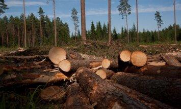 Par koku nozagšanu valsts mežā ar vairāk nekā 10 000 eiro soda Balvu novada iedzīvotāju