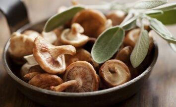 Растет спрос на выращиваемые в Латвии японские грибы шиитаке