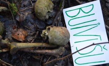 Foto: Līķu kauli un 'džungļi' – aculiecinieku pārsteidz postaža Buivīšu pilskalnā
