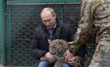 Путин зашел в клетку к леопарду, Медведев покормил бактерии