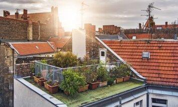 Dabas ienākšana starp pilsētas mūriem – jumta dārzi un to specifika