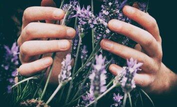 Kādas maģiskās puķes uzdāvināt māmiņai?