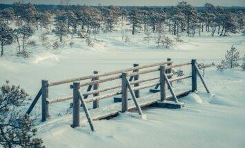 Foto: Spelgonis un ziemas saule agrā janvāra rītā Ķemeru tīrelī
