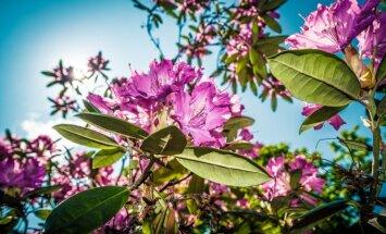 Smaržu un krāsu pasaku valstība Pārdaugavā